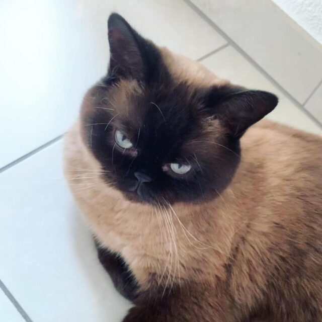 ¿Los gatos tienen acné?