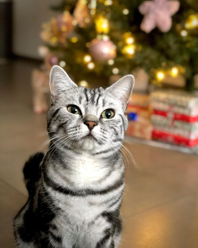 Keep cats away from the Christmas tree