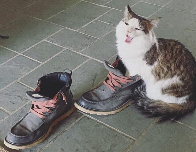 Why do cats like feet?