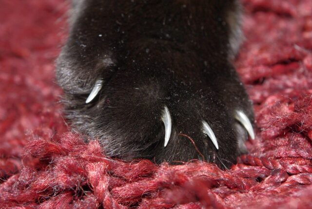 how to cut cat nails