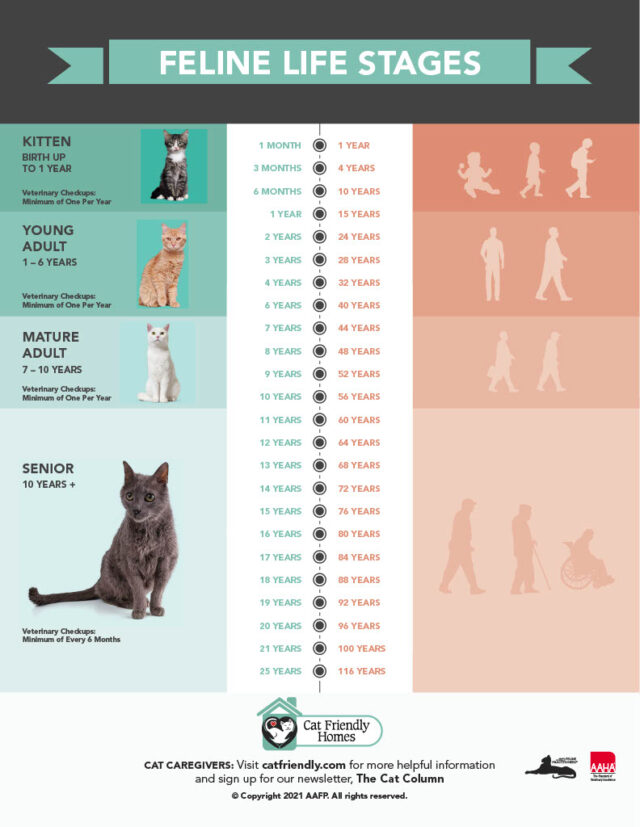 Cat age table