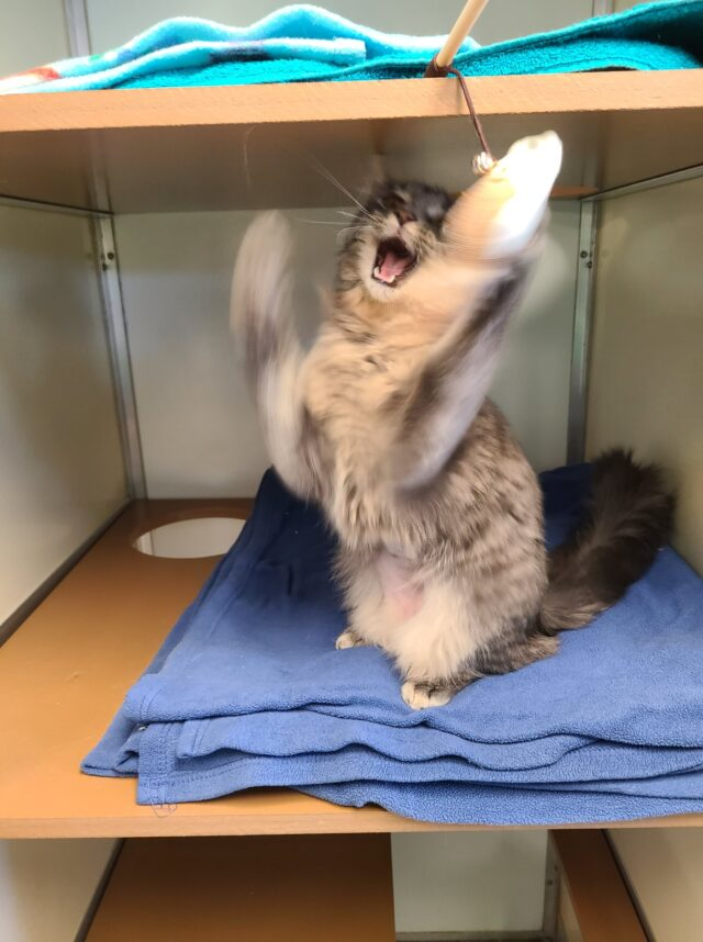 Adoptable Cat High-Fives Toy