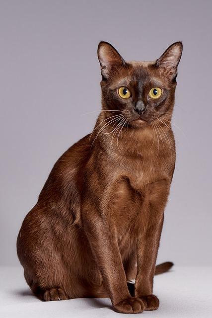 cat breeds doglike personalities