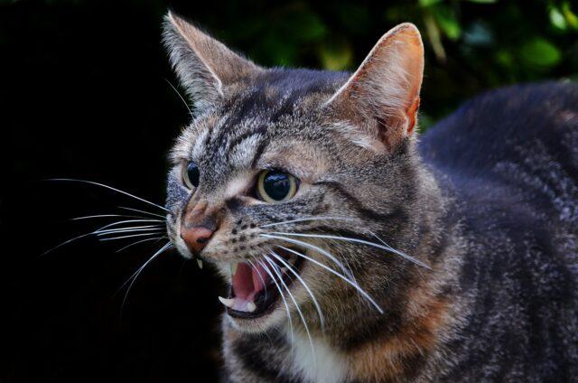 cat suddenly attack