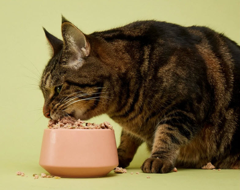 Smalls All-Natural Cat Food Takes The Guesswork Out Of Feeding Your Feline