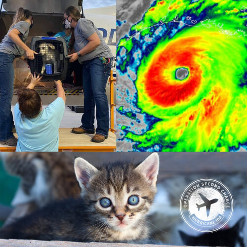 Donate To Fund Emergency Flight For Pets In Path Of Hurricane Ida