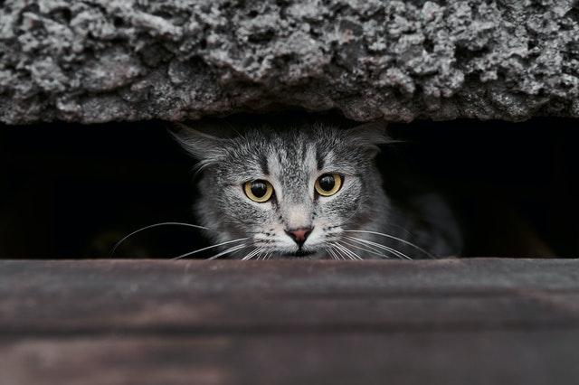 is my cat sad